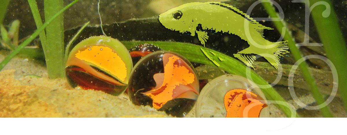 Ergotherapie DTF Aquarium